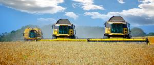 """Cerealicoltura, Mancuso: """"Non lasciamo soli gli agricoltori siciliani"""""""