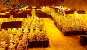 Scoperta maxi piantagione di marijuana nel Trapanese, 5 arresti