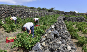 Ben Ryé 2015 Passito di Pantelleria nella Top 100 mondiale di Wine Enthusiast