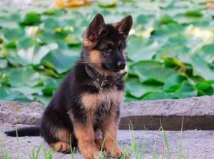 Calci e pugni ad un cucciolo, condannato 49enne di Sciacca