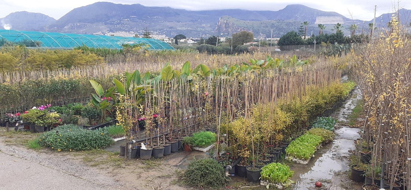 Piana degli Albanesi alberi